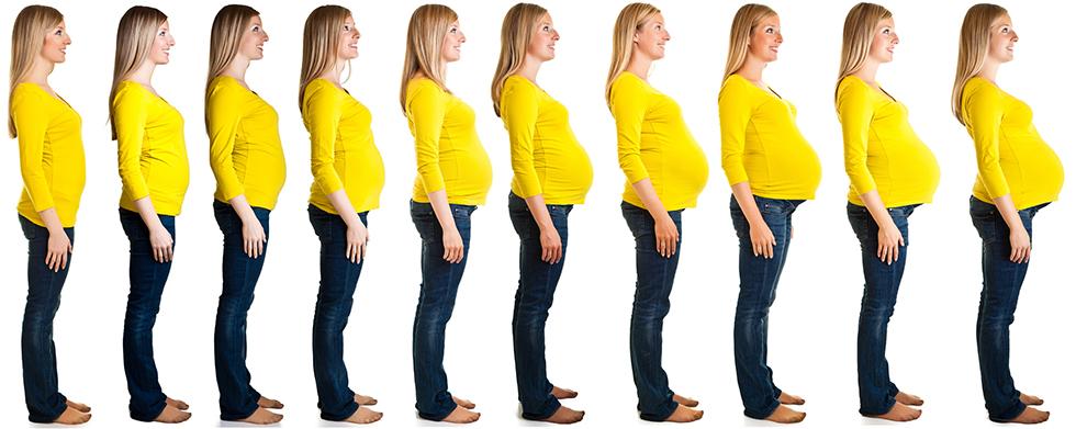 Gravid magens utvikling