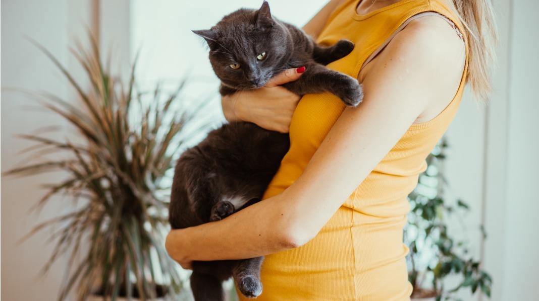 Baby og katt