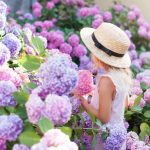 little-girl-is-in-bushes-of-hydrangea-flowers-in-sunset-garden-picture-id1070844516