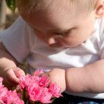 barn giftige blomster