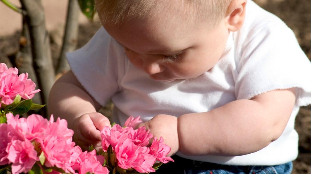 Barn elsker å utforske. Da er det greit å vite hvilke planter og blomster du bør unngå. Illustrasjonsfoto: iStock