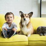 boy-sitting-on-yellow-sofa-with-welsh-corgi-dog-and-scottish-fold-cat-picture-id1044929380