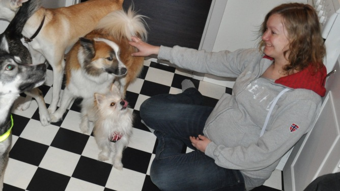 """Ingunn inviterte alle hundene i nabolaget til """"puppy playdate"""" for å kose seg litt før fødselen. Begge foto: privat"""