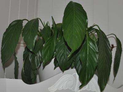 Også plantene til Ingunn lider under tidspresset.