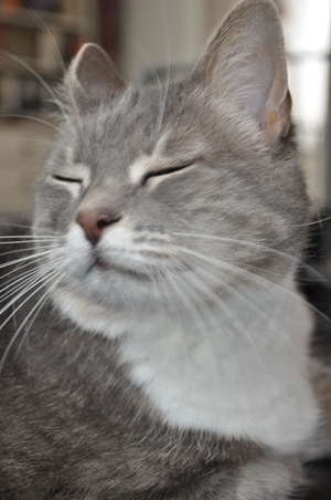 Katten Bastian. Foto: privat