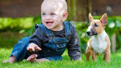 Kjært kjæledyr har menneskenavn? Foto: Shutterstock