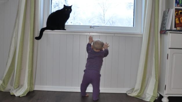 Minien prøver å nå opp til katten Tsunami. Foto: privat