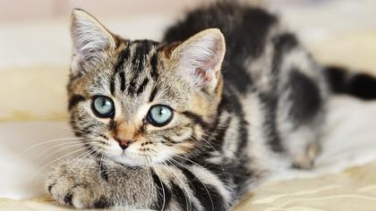 Linus-pusen? Foto: Shutterstock