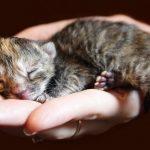 kitten on a hand
