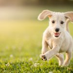 puppy-running-at-the-park-picture-id1184654849